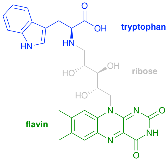 chemical structure of a model of the cryptochrome active site, featuring a tryptophan moiety and a flavin moiety linked by a ribose-derived tether.